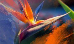 """Ya está disponible """"Ave del paraíso"""" de Chloé Bird"""